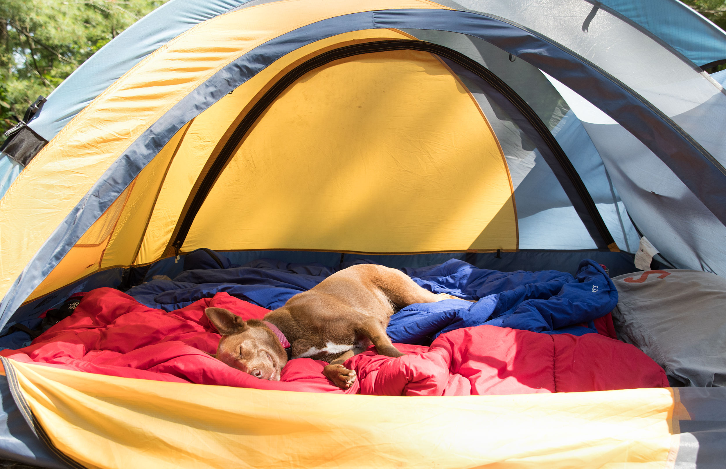 CAMPING WITH KIDS | FAMILY | CHILDHOOD | Dog | Tent | Explore | 7