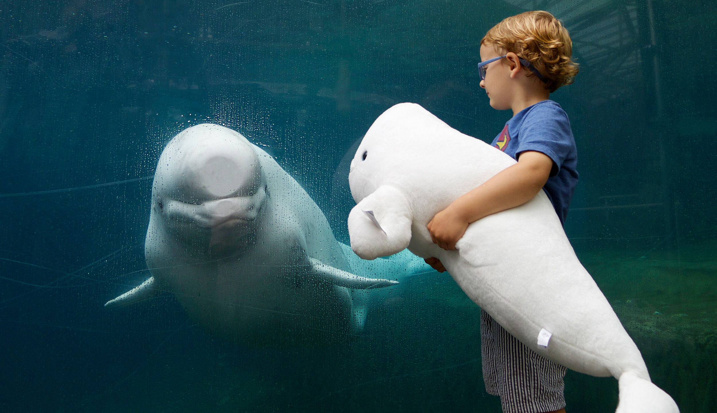 KIM LOWE | DIRECTOR PHOTOGRAPHER | KIDS  | MYSTIC AQUARIUM | BELUGA WHALE | EXPLORE | Discover | 49