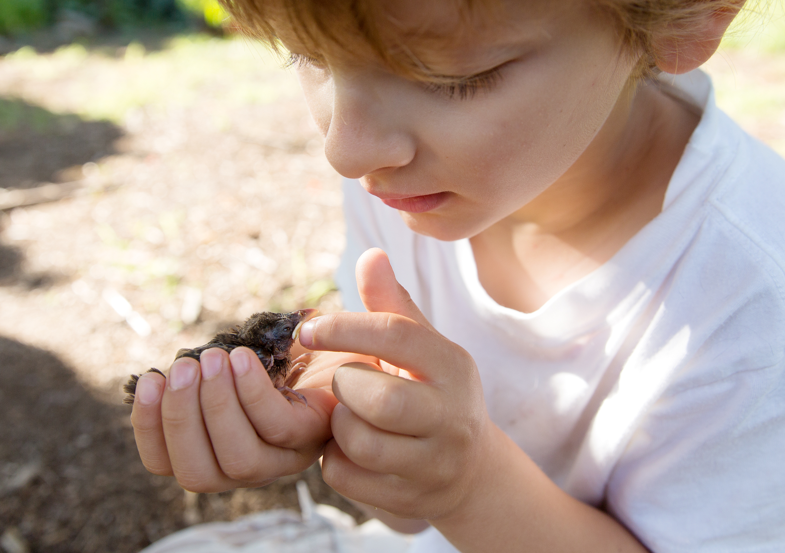 PHOTOGRAPHER | KIDS | GROW | GARDEN | WILDLIFE | BABY BIRD | Gardening With Kids | 7