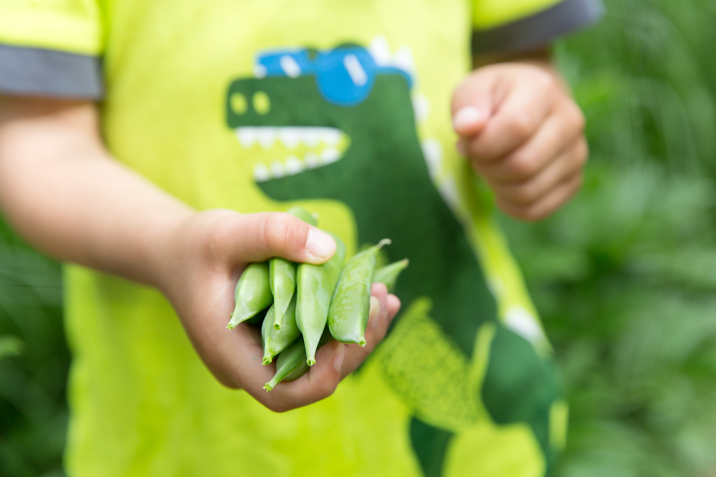 PHOTOGRAPHER | KIDS | SNAP PEAS | CITY GARDEN | HARVEST | GROW | Gardening With Kids | 39