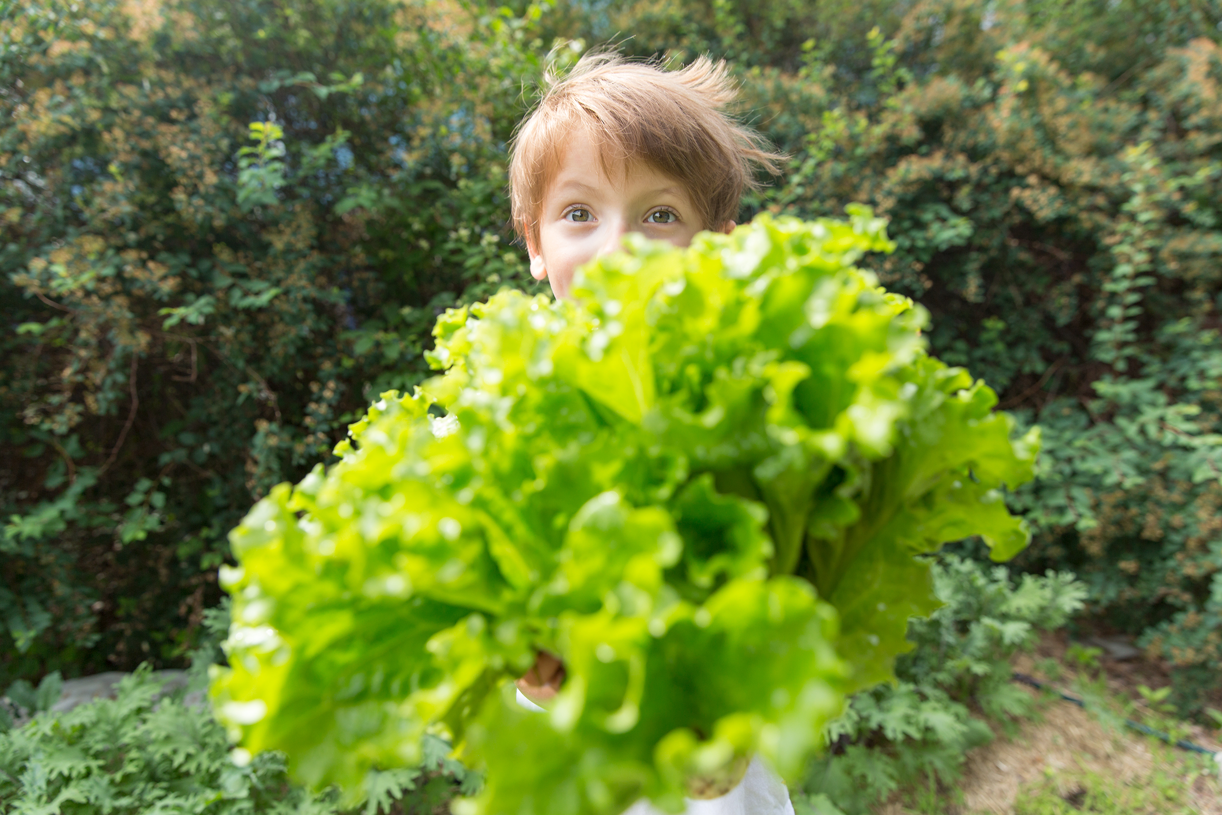 PHOTOGRAPHER | KIDS | ORGANIC | LETTUCE | GROW | Gardening With Kids | 41