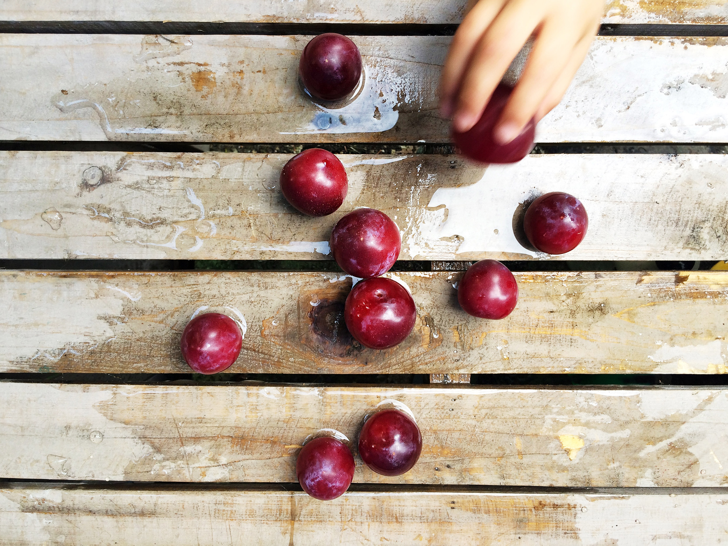PHOTOGRAPHER | FRESH PLUMS | FOOD | Kids in the Garden | Eat | 47