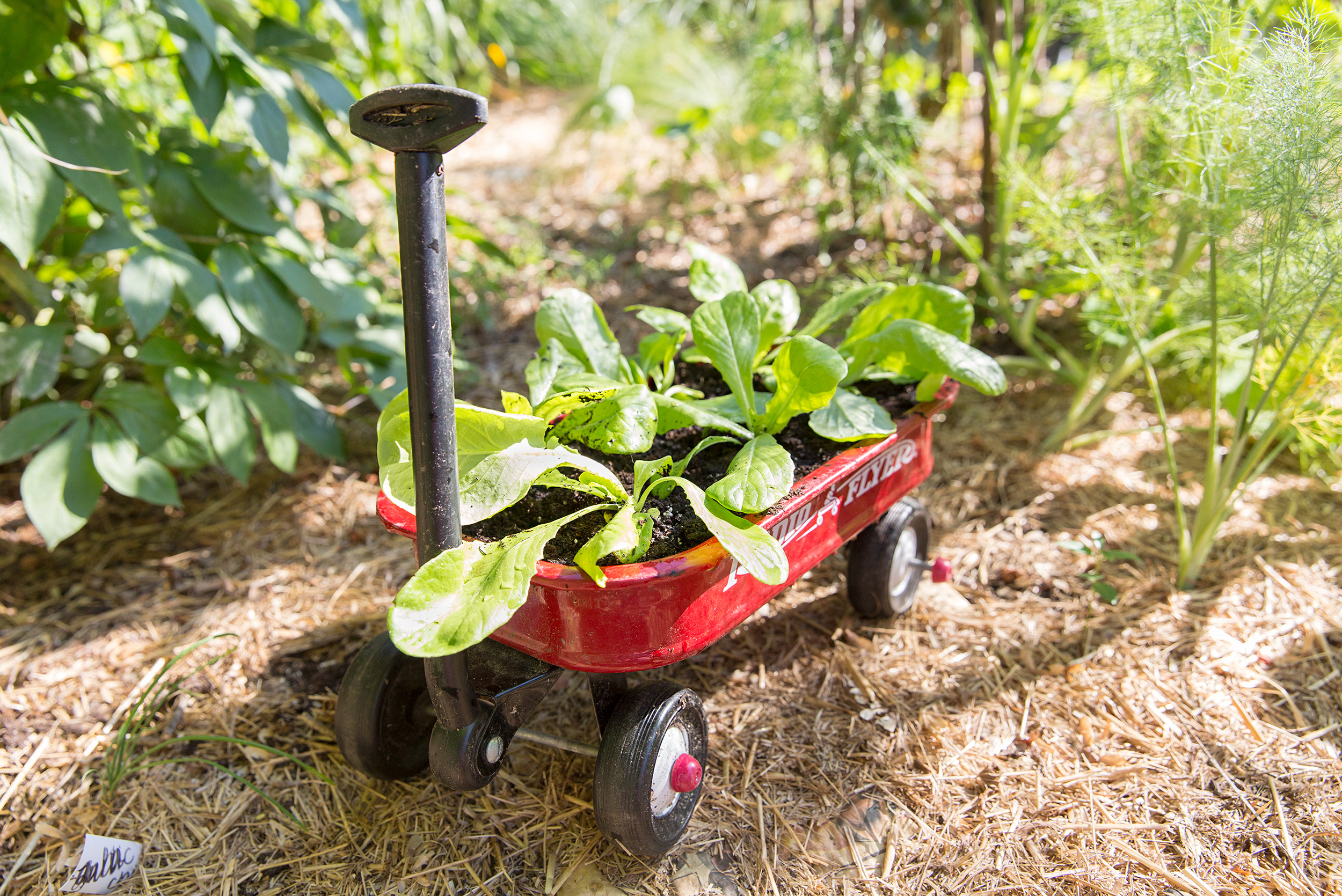 PHOTOGRAPHER | KIDS | GROW | Radio Flyer Wagon | Storey Publishing | Gardening With Kids | 30
